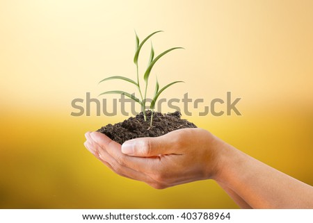 Hand holding Ivy plant on soil with blurred beautiful sunset background. metaphoric for Conservation, Climate change, Alternative energy - stock photo