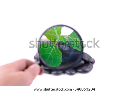 Hand holding magnifying glass with focus on leaf in the middle of Zen stone isolated on white background.