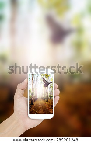 Hand holding mobile on nature background - stock photo