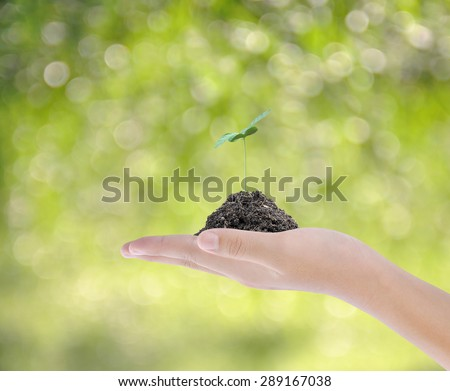 Hand holding plant on bokeh background  - stock photo