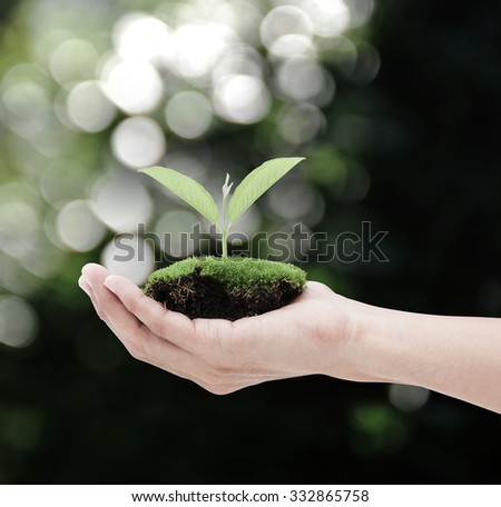 Hand holding plant on bokeh background , Ecology concept