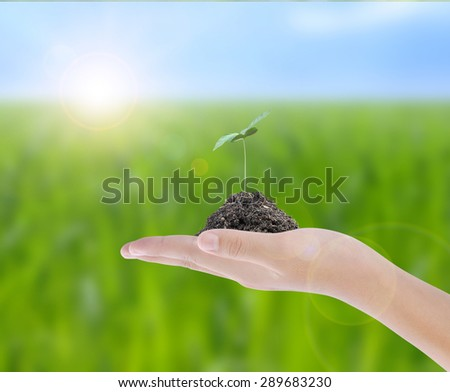 Hand holding plant on nature background  - stock photo