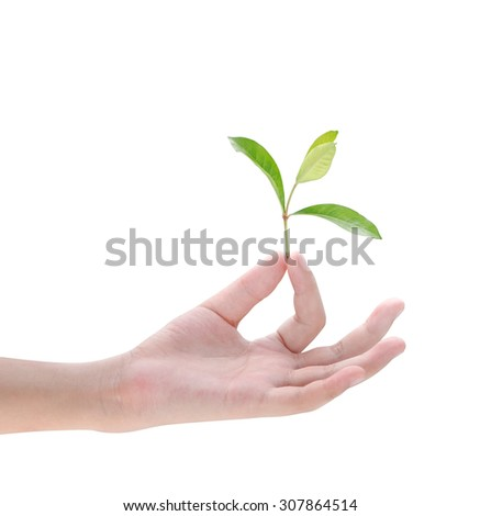 Hand holding plant on white background
