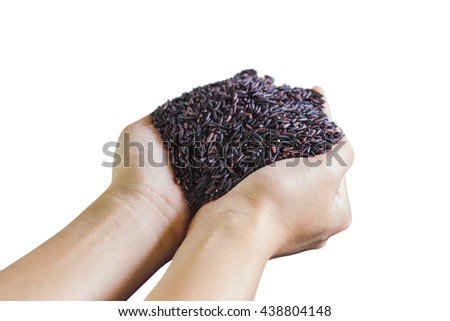 Hand holding raw rice berry on white background
