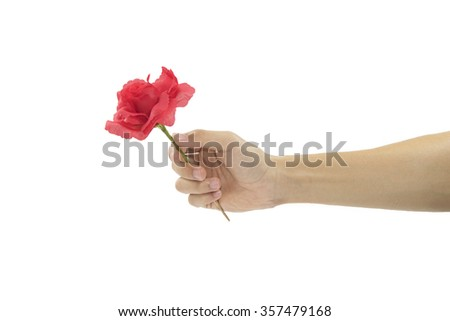 hand holding red rose isolated on white background.