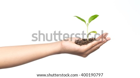 Hand holding sapling in soil isolated on white background