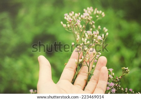 Hand holding small flower in the garden with retro filter effect  - stock photo