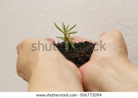 hand holding soil and small plant