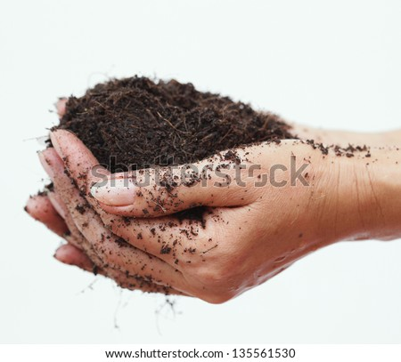 Hand holding soil,Hand dirty with soil on white - stock photo