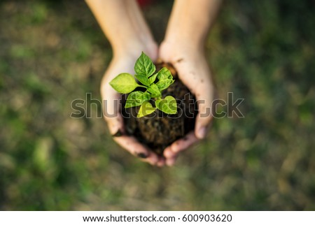 Hand holding sprout for growing nature