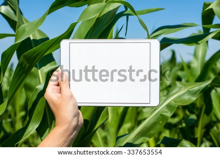 Hand holding tablet in corn field during summer - stock photo