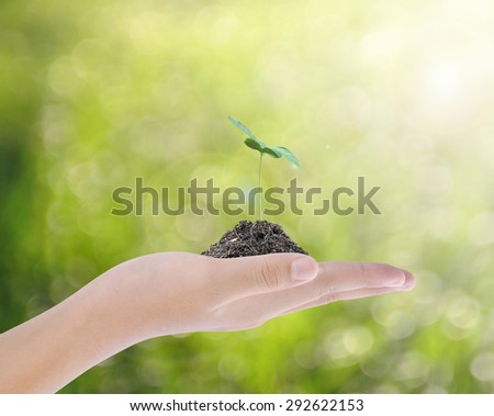 Hand holding tree , plant concept