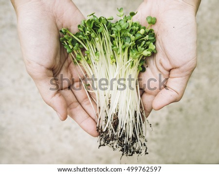 Hand holding Vegetable Organic Farm product in Farmer Hand
