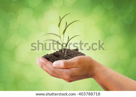Hand holding vine plant on soil with beautiful blurred green and Bokeh background. metaphoric for Environment, Spring, Economy, Investment, Health Care, Climate change - stock photo