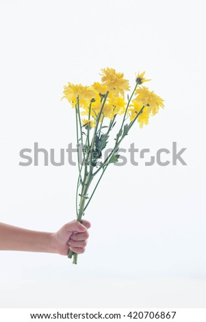 hand holding yellow flower on white background.