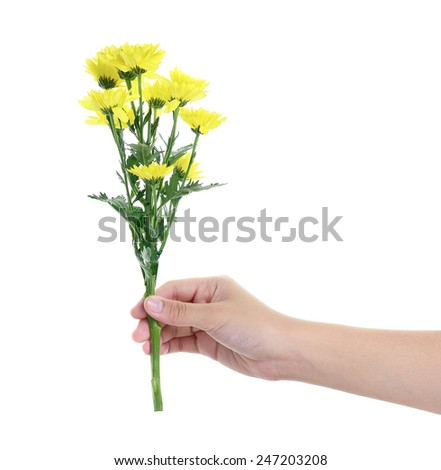 hand holding yellow gerbera flower on white background