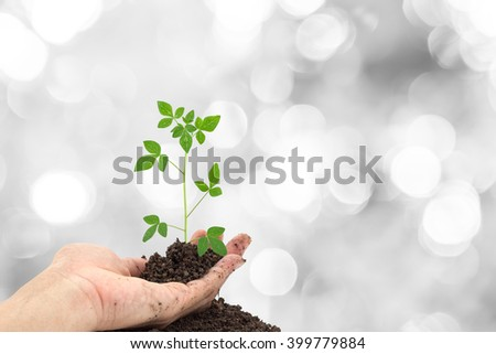 Hand holding Young green plant on  the soil ,on bokeh light background.  - stock photo