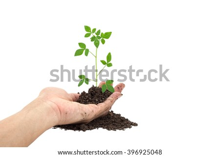 Hand holding Young green plant on  the soil ,on white  background.  - stock photo