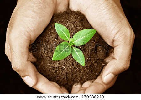 Hand holding young plant with soil - sepia effect - stock photo