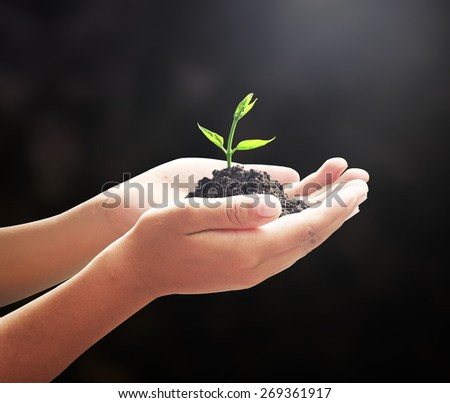 Hand holding young Tree. Medical Idea Seed Child CSR Family Fresh Give Grace Honor Honour New Begin Plant Life Soil Sprout Trust Earth Hour Food Ecology Dark Bio Save Think Plant Black Grow Nature.