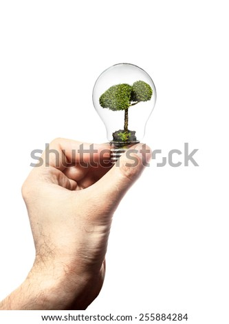 Hand holds the incandescent lamp with wood inside isolated on white background