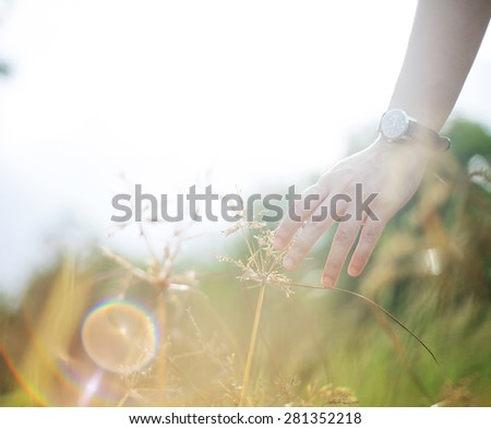 Hand in a field with sun flare - stock photo
