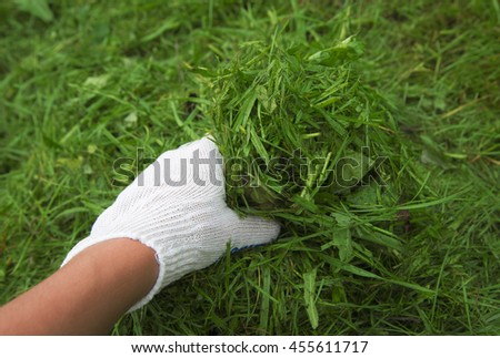 Hand in a white glove on the grass background. Low depth of focus.