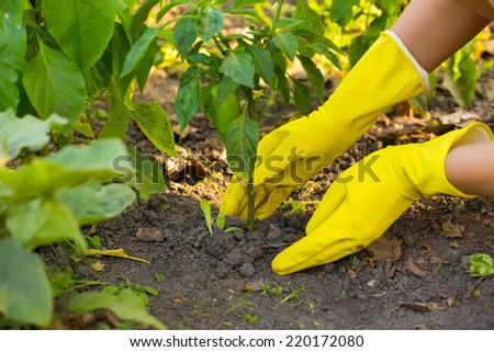 Hand in gloves planting new plant - stock photo
