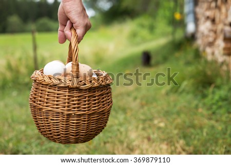 hand is holding a basket full of fresh bio eggs, green meadow with copyspace - stock photo