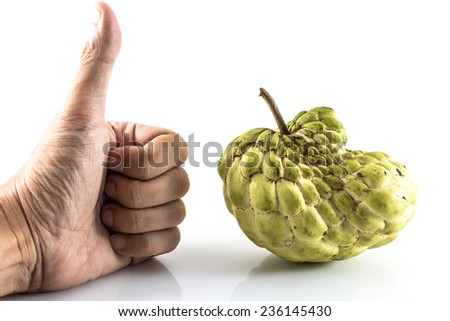 Hand like Sugar Apple ( custard apple, Annona, sweetsop,Cherimoya fruit )  on white background - stock photo