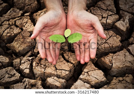 hand nurturing a young green plant  growing on dried, cracked ground - protect nature concept - stock photo