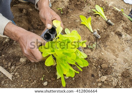 hand of a farmer planting new salads