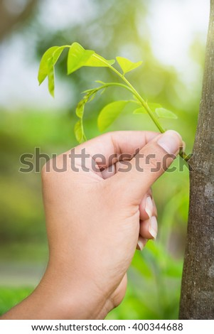 Hand of asia woman with seedling on green nature background. - stock photo