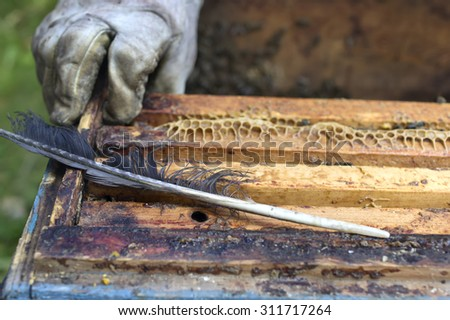 Hand of beekeeper in protective glove in the blurred background, feather for cleaning in focus. Outdoor horizontal shot