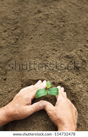 Hand of farmer planting seedlings - stock photo