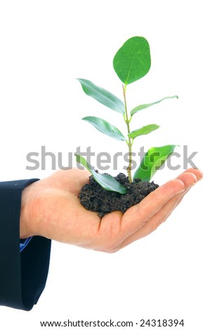 hand of male holding growth plant. concept for environmental friendly or growth