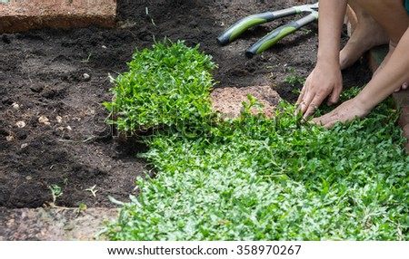 Hand on planting green grass on garden
