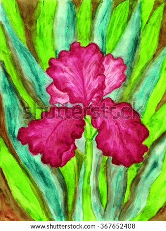 Hand painted picture, watercolours, iris of crimson colour. - stock photo