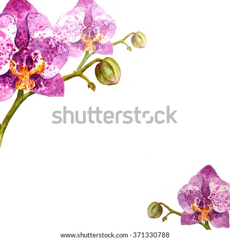 Hand painted watercolor background. Watercolor orchid flower