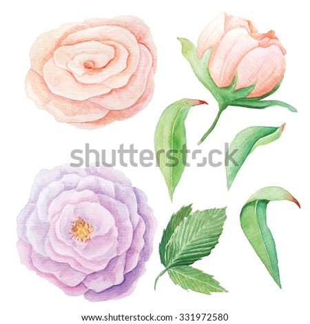 Hand painted watercolor roses, peony and leaves. Isolated floral clip art. DIY collection of flower - stock photo