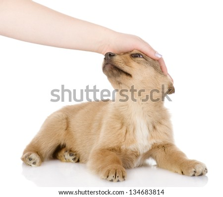 hand patting dog head. isolated on white background - stock photo
