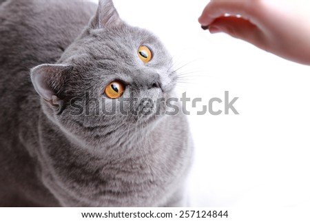 hand plaiyng with fluffy cat - stock photo
