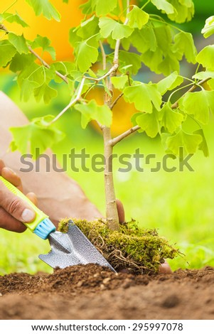 Hand Planting Small Tree with roots in a garden on green background - stock photo