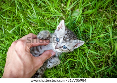 Hand playing with a little kitten on the green grass - stock photo
