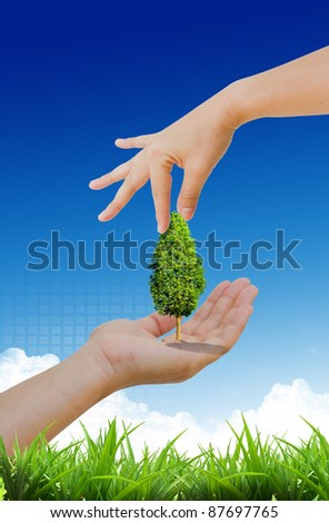 hand propose tree in the nature - stock photo