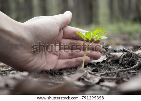 hand protect new leaf on the ground. ecology concept