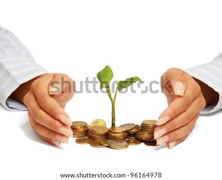 Hand protecting seedling - stock photo