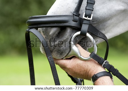 hand puts the bit inside of the horse's mouth