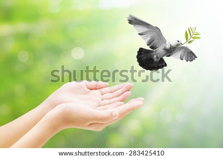 Hand releasing a bird into the air , all concept , beauty ,freedom,peace ,spirituality - stock photo