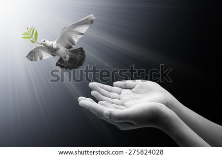 Hand releasing a bird into the air , all concept , peace and spirituality - stock photo